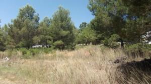 Parcela urbana zona de Torrente